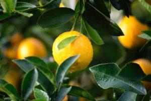 citrus-close-up